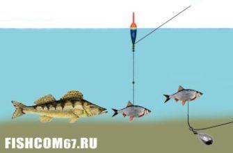 Ловля судака на живца и мертвую рыбку