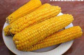 Кукуруза самая лучшая наживка на карпа