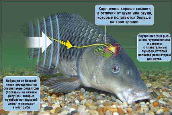 Наука о рыбах
