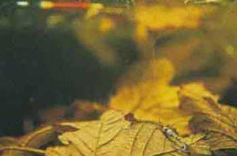 Ловля осенью на нимфу с сигнализатором поклевки
