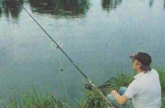 Фидерная ловля