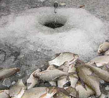 Как ловить рыбу зимой