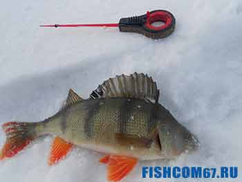 Как ловить окуня зимой