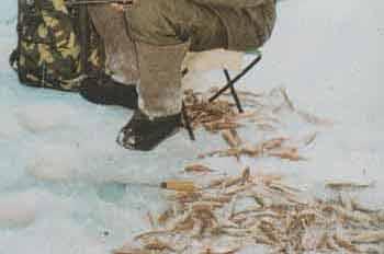 Рыбалка в Тюмени