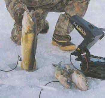 Ловля судака зима