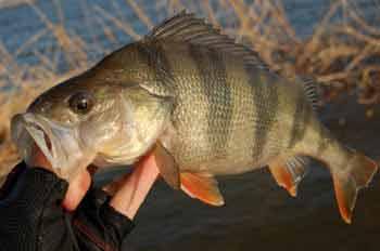 Рыбалка в Карелии в августе