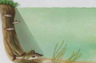 Как правильно ловить щуку