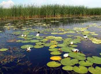 Прудовая рыба и водная растительность