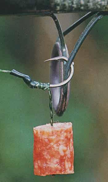 замоченное зерно на рыбалку