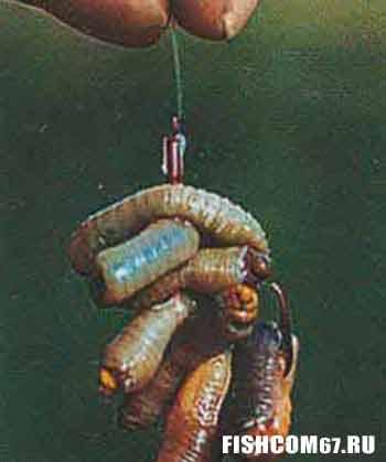 Шашлык из червей прекрасная приманка