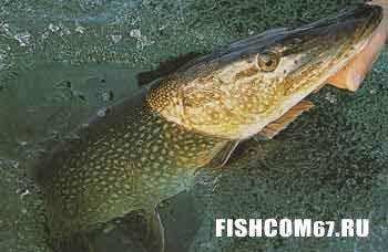 Зимняя рыбалка на севере Европы — в Швеции