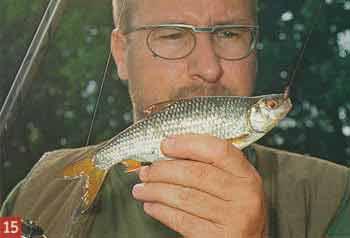 Ручейник для рыбалки