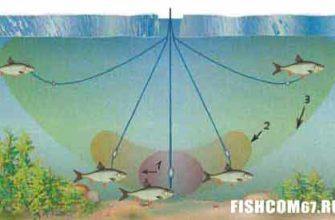 Зоны свободною плавания живца на жерлице