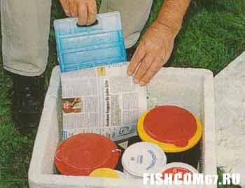 Черви и опарыши в пенопластовом ящике готовы к путешествию на рыбалку