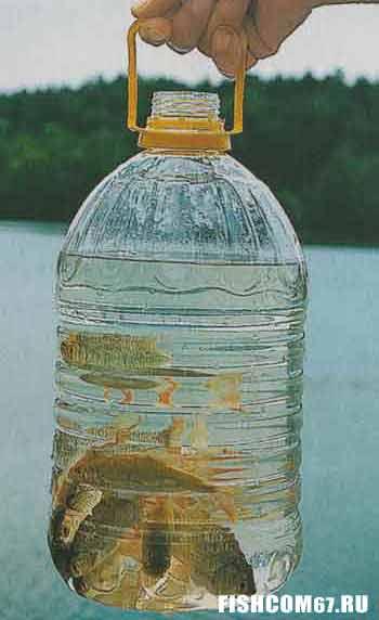 Рыбки-приманки в 5-литровых бутылках