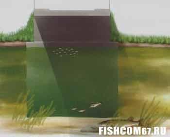Тень от моста дает укрытие мелким рыбам и хищникам