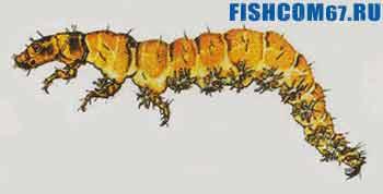 Личинка ручейника риакофила