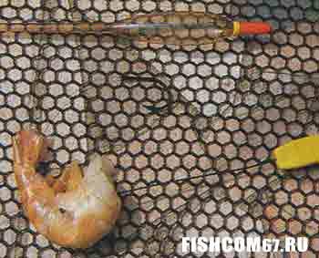 Королевская креветка на поплавочной оснастке